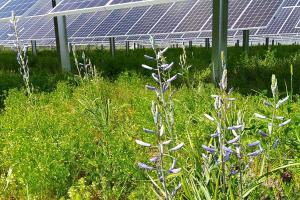 Pine Gate Renewables Picture of flowers and solar panels